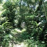 国仲御嶽の植物群落