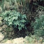 クスヌカー(後の井)