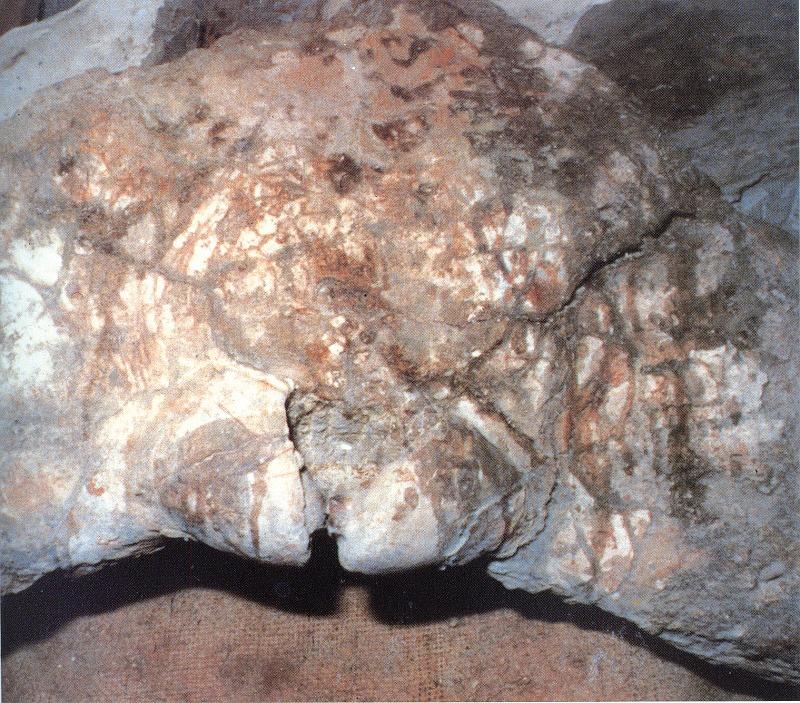 シマジリクジラ化石