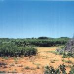 保良元島遺跡