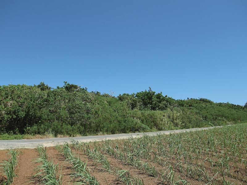 好善ミガガマ御嶽の植物群落