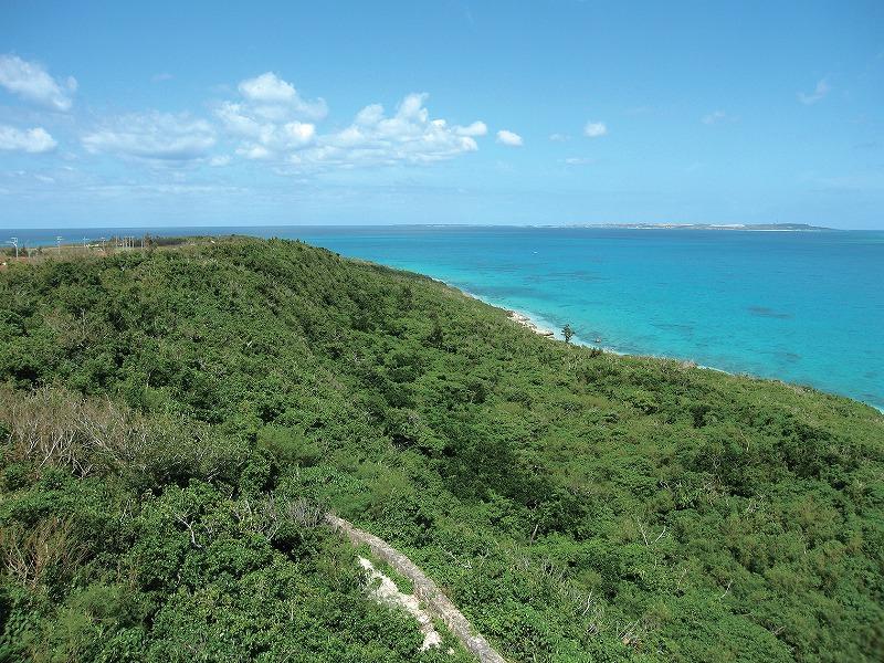 来間島断崖の植生