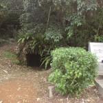 【戦争遺跡】海軍第313設営隊の地下壕群